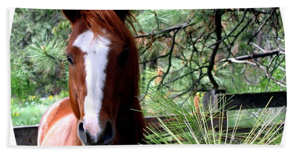 Horse Beach Towel featuring the photograph Horse Country by Will Borden