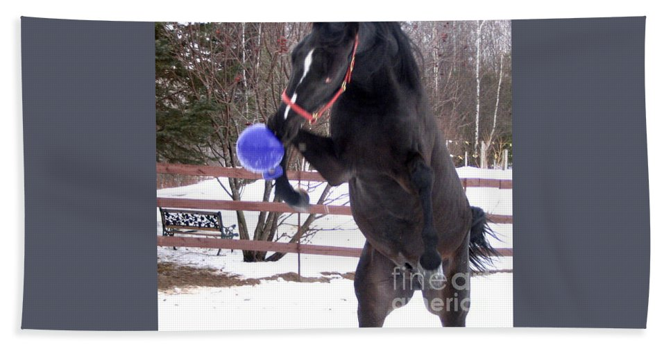 Horse Beach Towel featuring the photograph Horse Playing Ball by Line Gagne