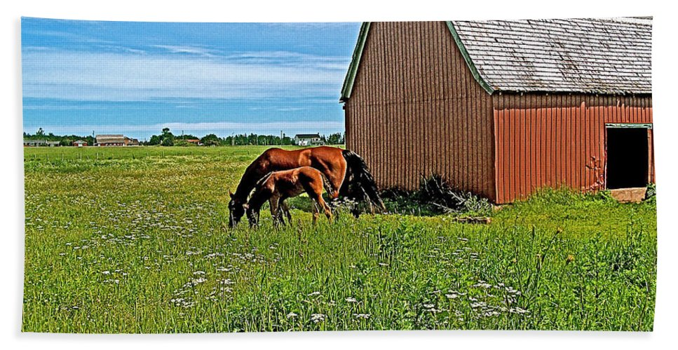 Horses By A Barn Along Confederation Trail On Prince Edward Island Beach Towel featuring the photograph Horses By A Barn Along Confederation Trail-pei by Ruth Hager