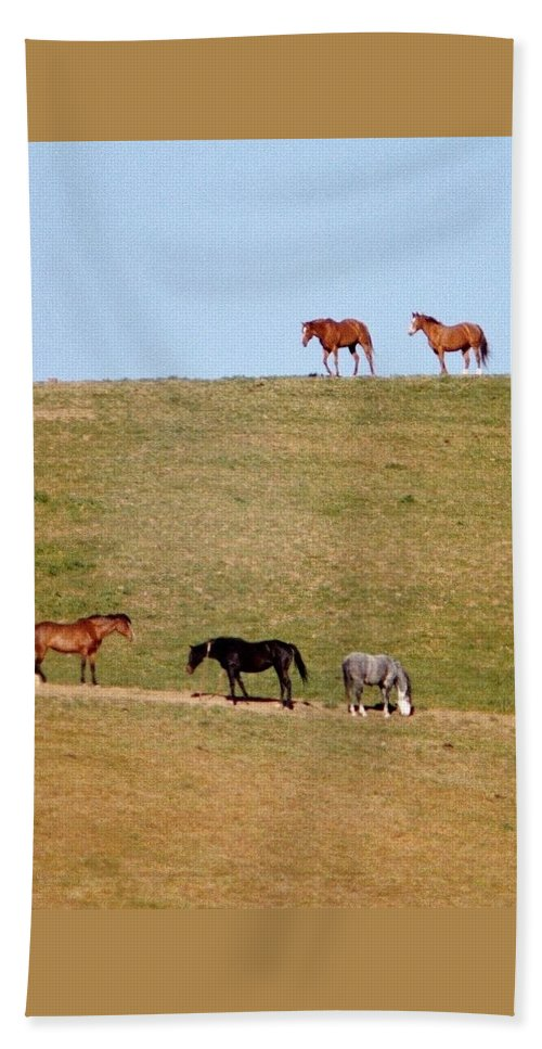 Horses Beach Towel featuring the photograph Horses Of Hayward by Elaine Burlew