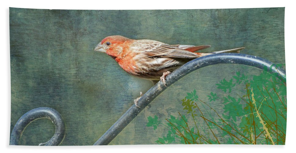 Nature Beach Towel featuring the photograph House Finch With Verse by Debbie Portwood