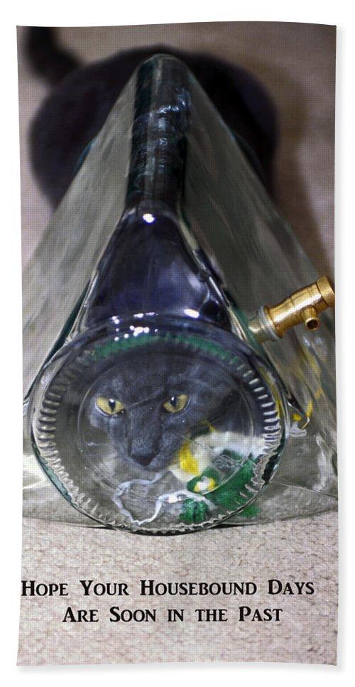 Dark Grey Kitten Squeezed Into Glass Sun Tea Jug Beach Towel featuring the photograph Housebound Days by Sally Weigand