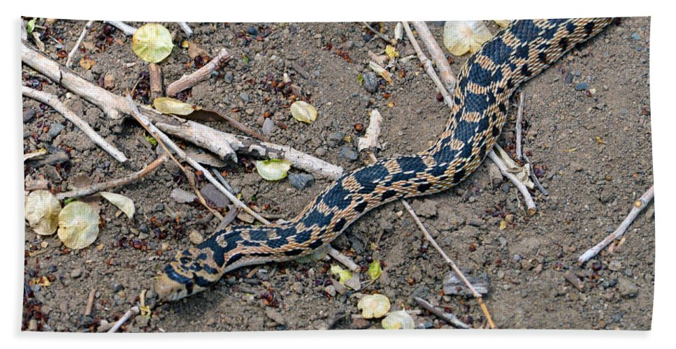 Snake Beach Towel featuring the photograph Hssssss by Brent Dolliver