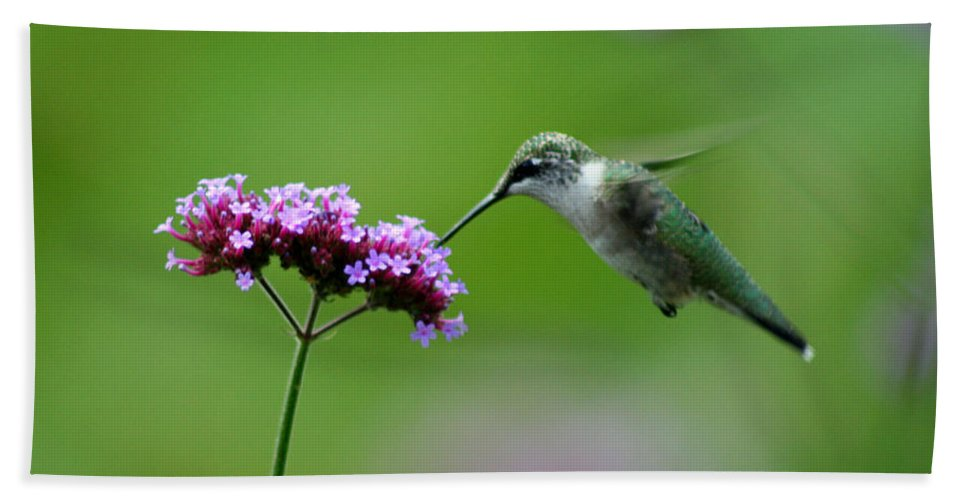 Hummingbird Beach Towel featuring the photograph Hummingbird by Karen Adams