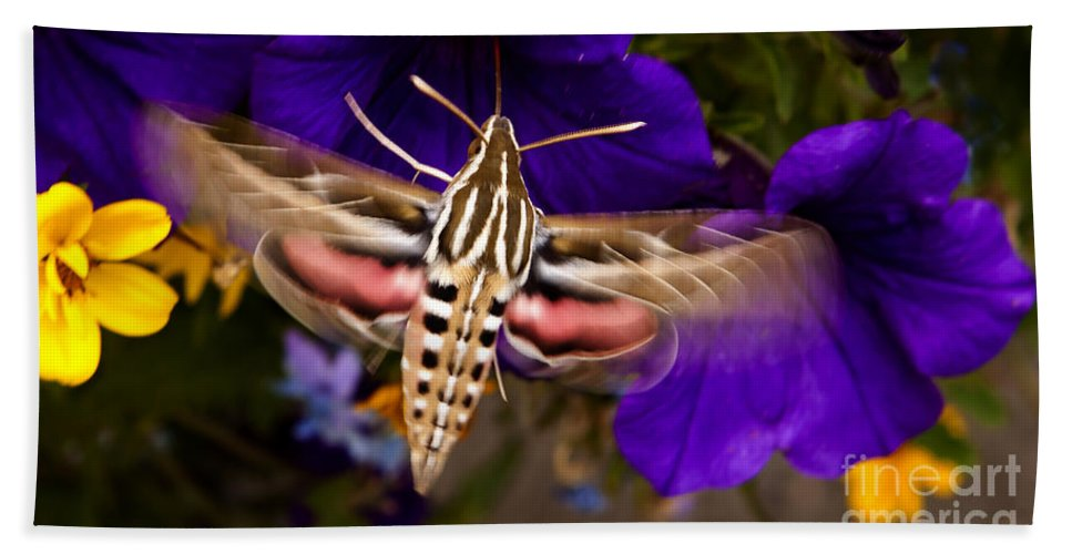 Moth Beach Towel featuring the photograph Hummingbird Moth  #8612 by J L Woody Wooden