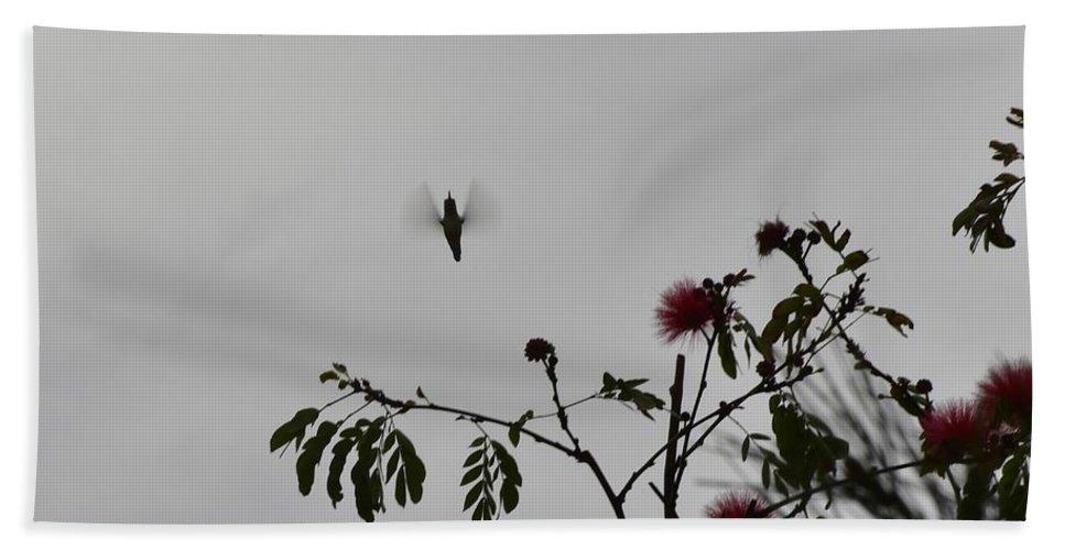 Linda Brody Beach Towel featuring the photograph Hummingbird Silhouette I by Linda Brody