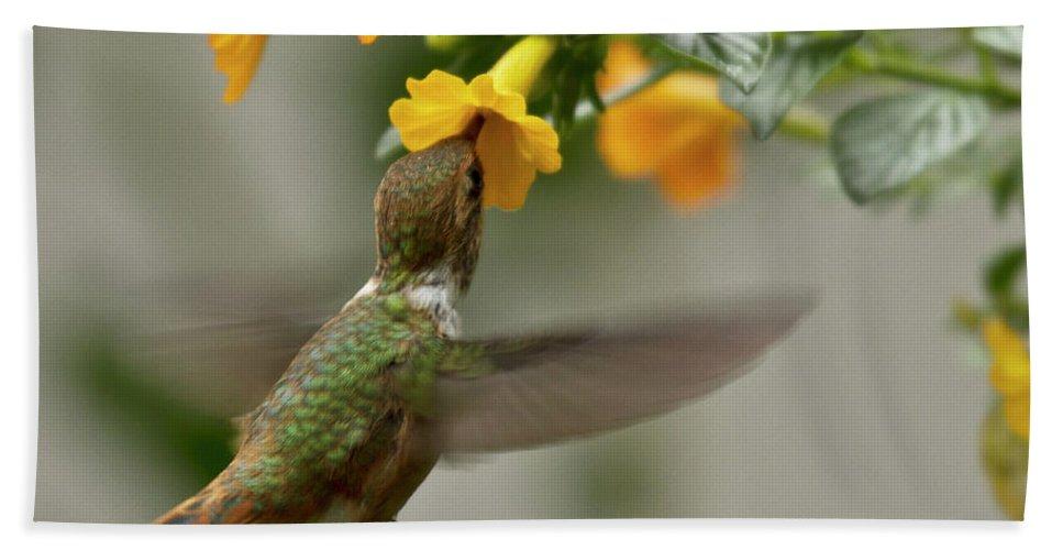 Bird Beach Towel featuring the photograph Hummingbird Sips Nectar by Heiko Koehrer-Wagner