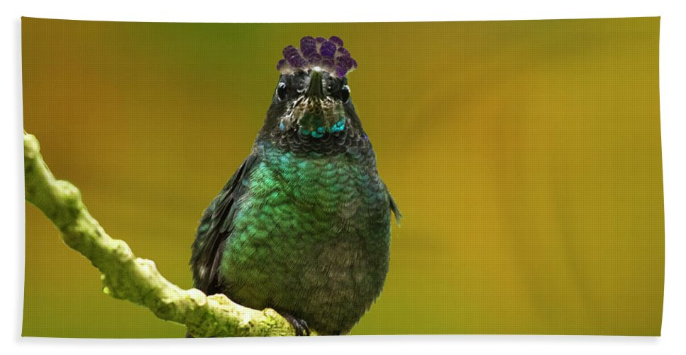 Magnificent Hummingbird Beach Towel featuring the photograph Hummingbird With A Lilac Crown by Heiko Koehrer-Wagner