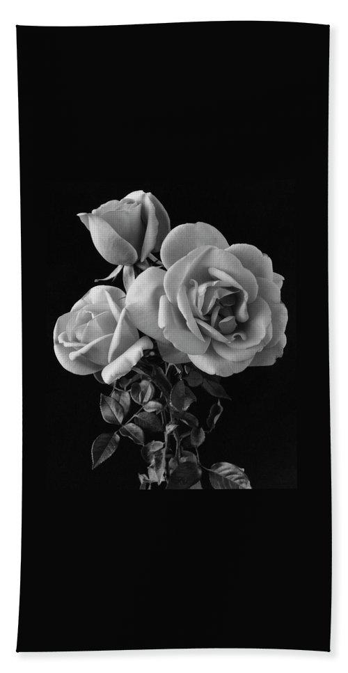 Plants Beach Towel featuring the photograph Hybrid Tea California Roses by Edwin T. Merchant