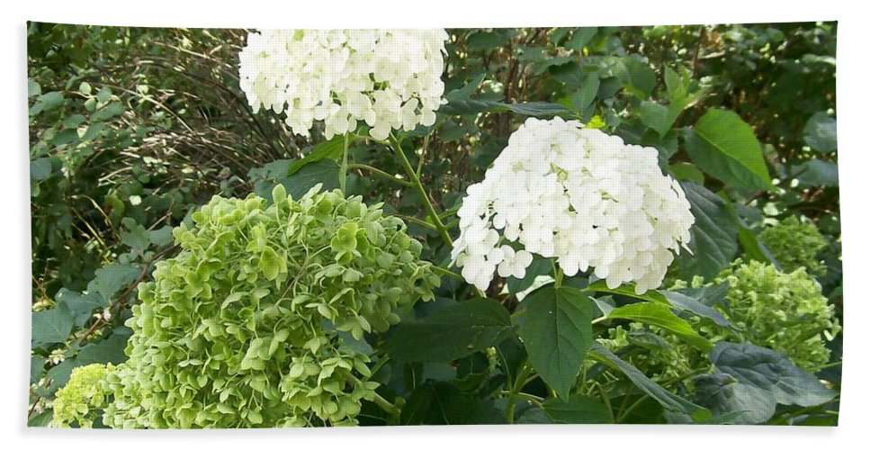 White Beach Towel featuring the photograph Hydrangeas by Laurie Eve Loftin