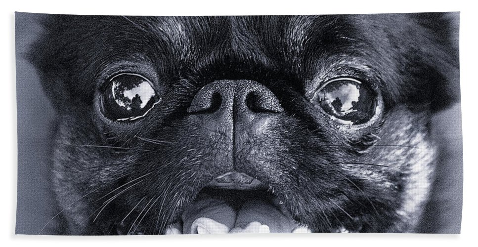 Brussels Griffon Beach Towel featuring the photograph I Am Cute And I Know It by Roger Wedegis