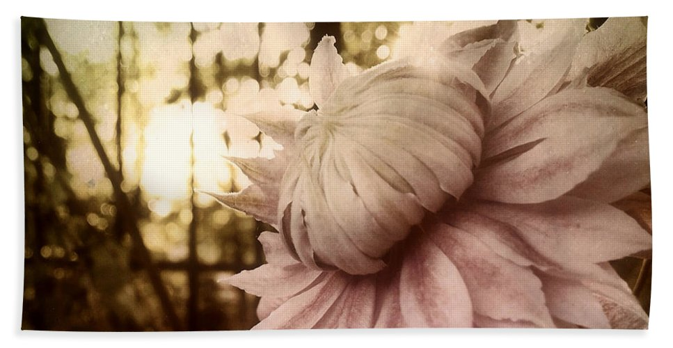 Pastel Pink Clematis Print Beach Towel featuring the photograph I Bloom Only For You She Whispered by Susan Maxwell Schmidt