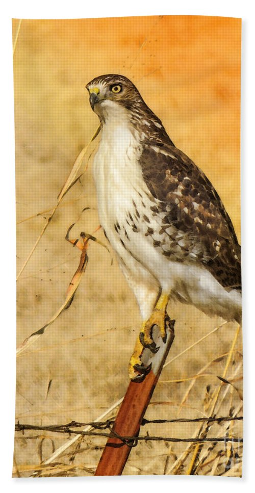 Red-tailed Hawk Beach Towel featuring the photograph I Can See Clearly by Betty LaRue