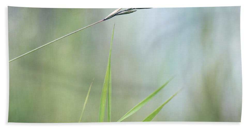 Spike Beach Towel featuring the photograph I Will Hold You by Priska Wettstein