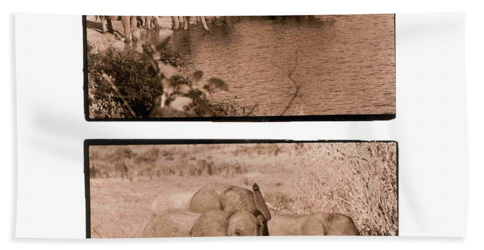 Africa Beach Towel featuring the photograph Elephants by Nancy Ingersoll
