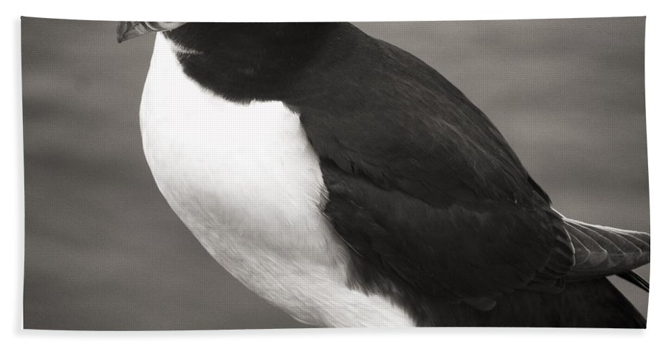 Iceland Beach Towel featuring the photograph Iceland Puffin by For Ninety One Days
