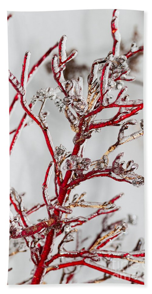 Red Beach Towel featuring the photograph Icy Red Dogwood by Les Palenik