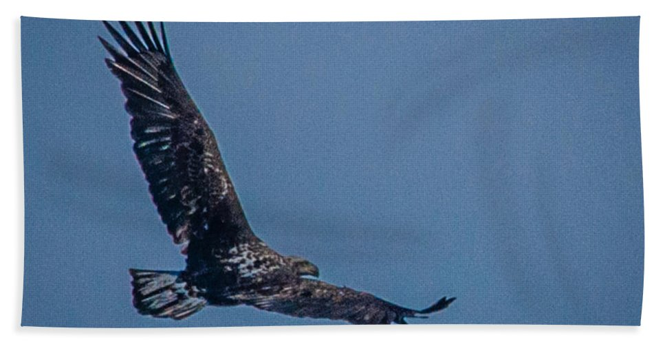 Bald Eagle Beach Towel featuring the photograph Immature Bald Eagle by Ronald Grogan