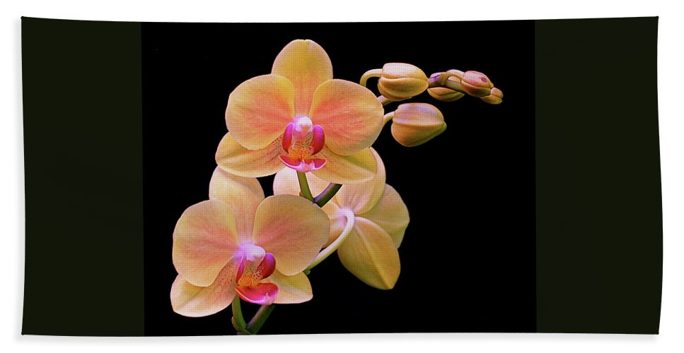 Orchid Beach Towel featuring the photograph In Bloom by Rona Black