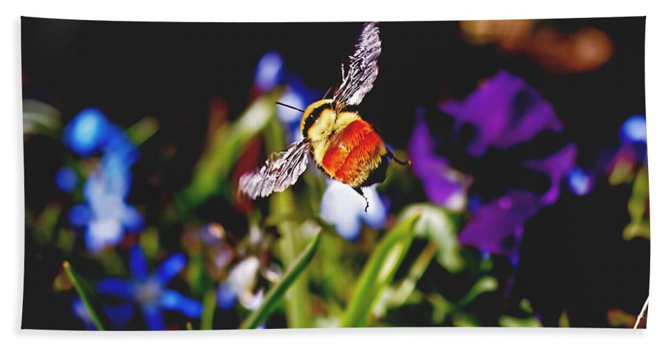 Bee Beach Towel featuring the photograph In Flight by Rona Black