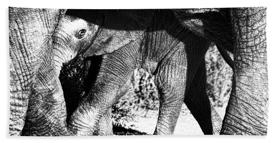 Elephant Beach Towel featuring the photograph In Mother's Shadow by Douglas Barnard