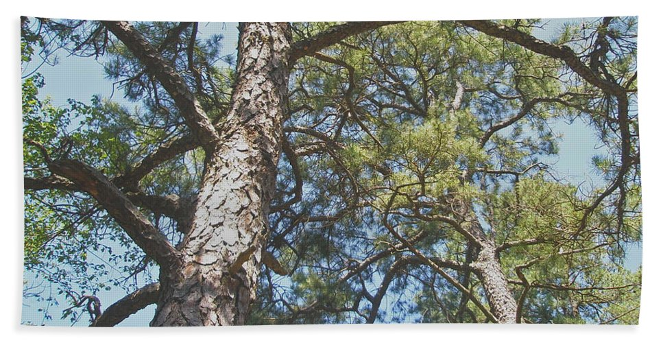 Pine Beach Towel featuring the photograph In New Jersey's Pinelands by Mother Nature