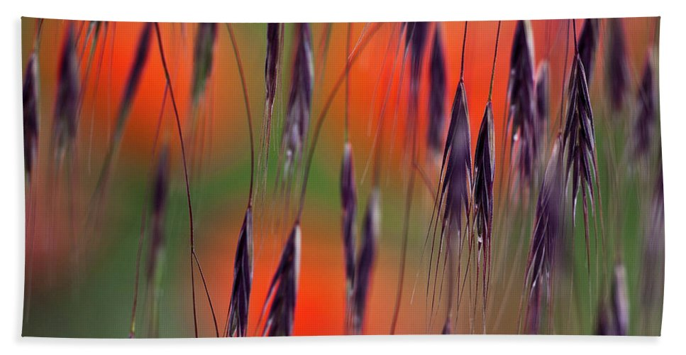 Abstract Beach Towel featuring the photograph In The Meadow by Heiko Koehrer-Wagner