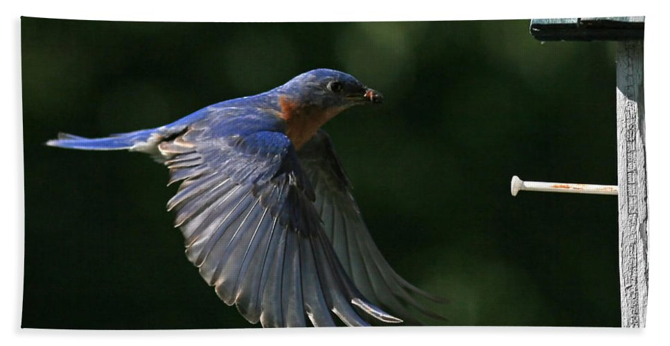 Bluebird Beach Towel featuring the photograph Incoming by Douglas Stucky