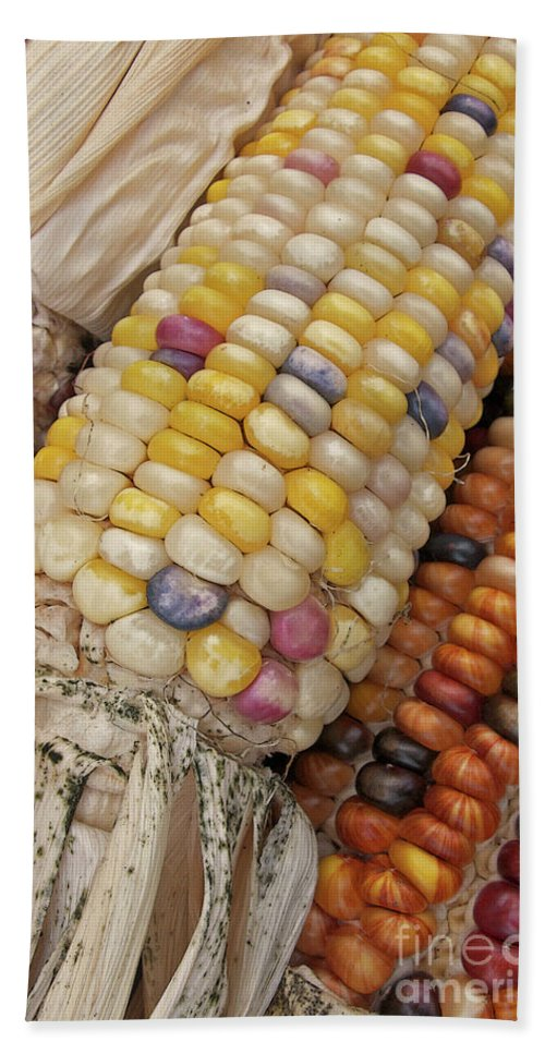 Indian Corn Beach Towel featuring the photograph Indian Corn by Ann Horn