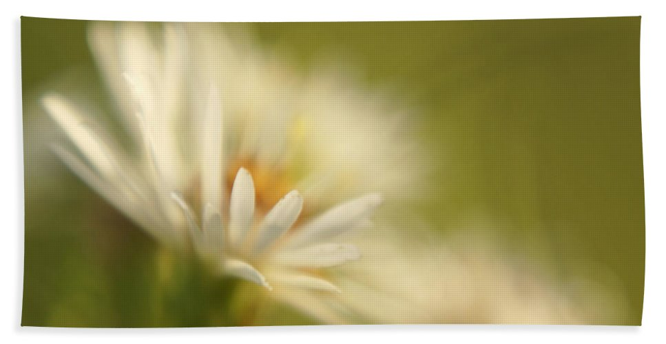 Flower Beach Towel featuring the photograph Innocence - Original by Variance Collections