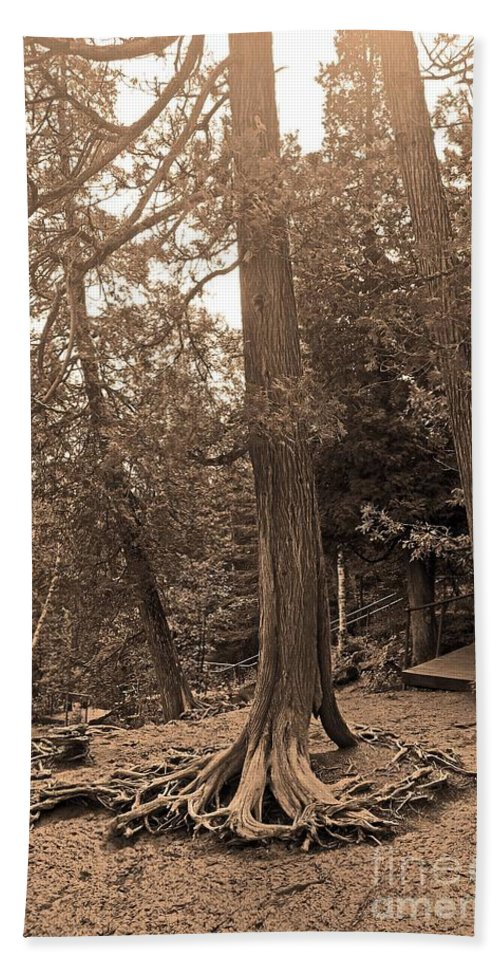 Tree Beach Towel featuring the photograph Interesting Tree by Stephanie Hanson