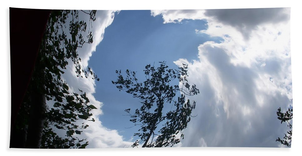Tree Beach Towel featuring the photograph Into The Sky by Aimee L Maher ALM GALLERY