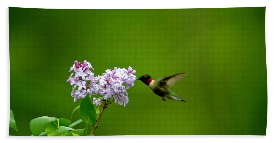 Ruby Throated Hummingbird Beach Towel featuring the photograph Irridescent Charmer by Thomas Phillips