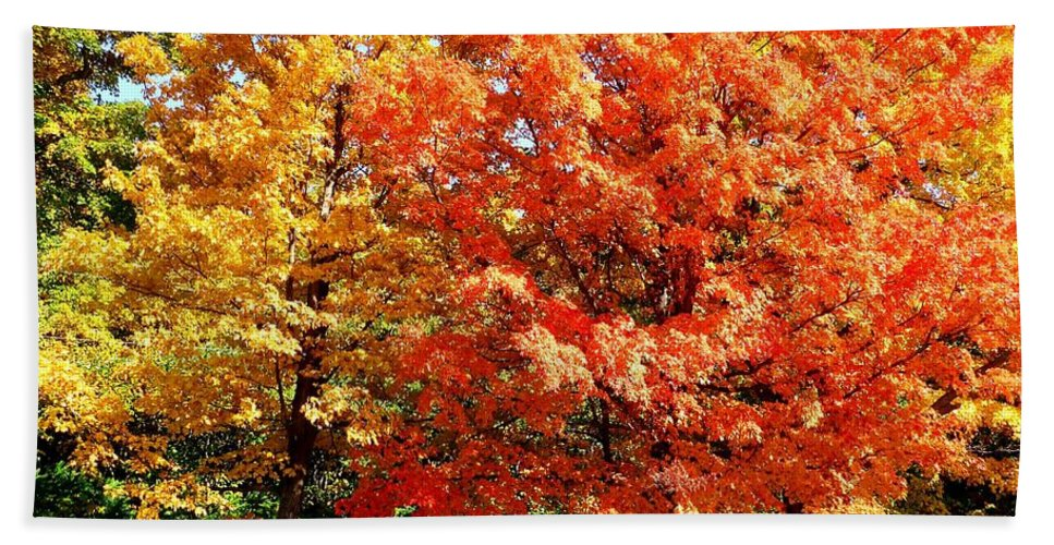 Autumn Beach Towel featuring the photograph Is Autumn Already by Cristina Stefan