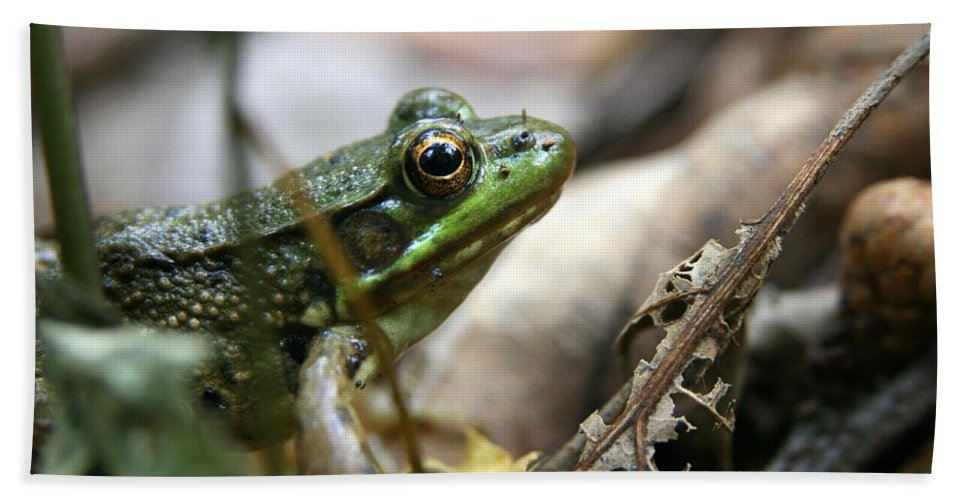 Green Frog Toad Beach Towel featuring the photograph It's Not Easy Being Green by Neal Eslinger