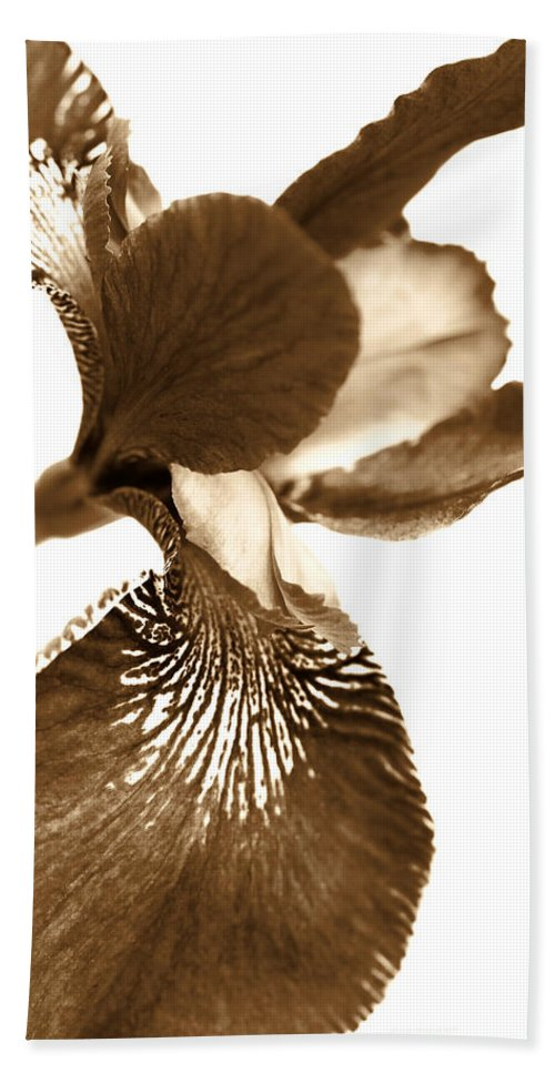 Iris Beach Towel featuring the photograph Japanese Iris Flower Sepia Brown by Jennie Marie Schell
