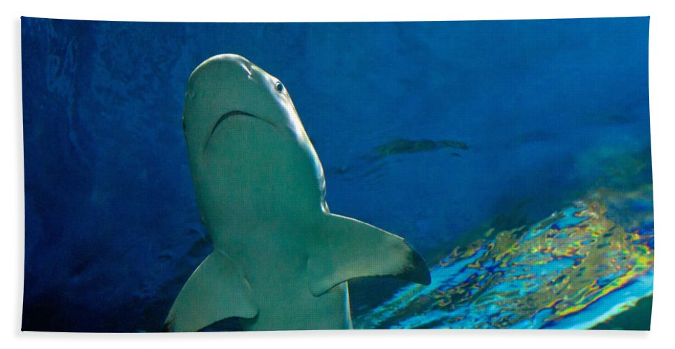Shark Beach Towel featuring the photograph Jaws by Eti Reid