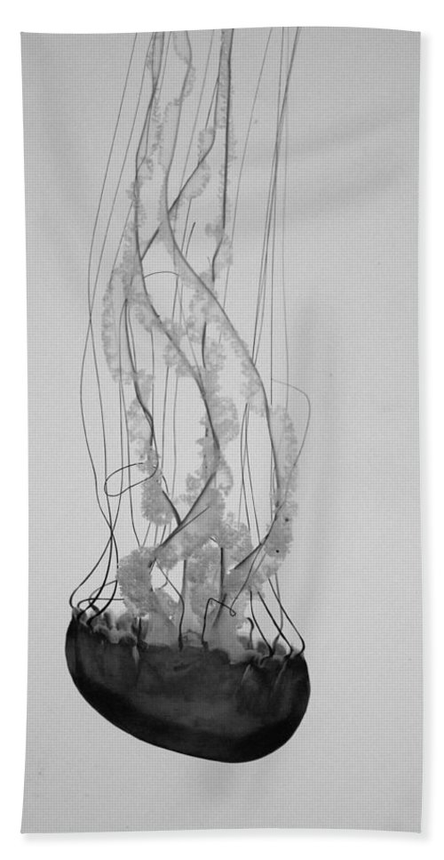 Toronto Beach Towel featuring the photograph Jelly Fish Basics by Kyra Savolainen