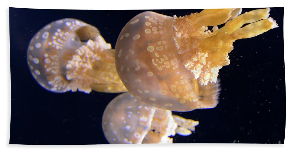 Jellyfish Beach Towel featuring the photograph Jellyfish 8 by Bob Christopher