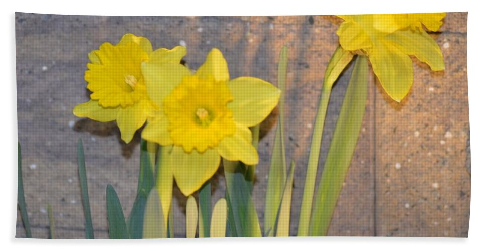 Daffodils Beach Towel featuring the photograph Jonquil by Sonali Gangane