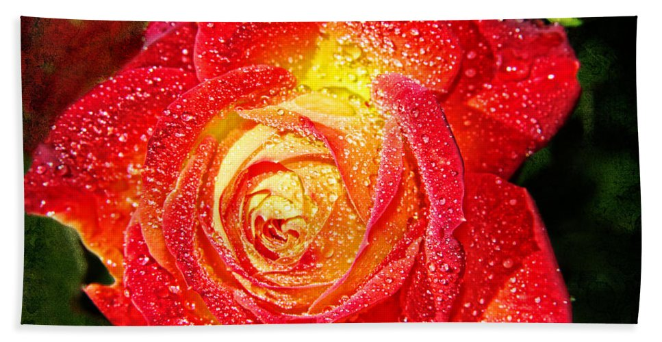 Unity Rose Beach Towel featuring the photograph Joyful Rose by Mariola Bitner
