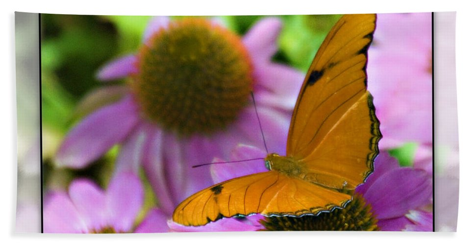 Julia Butterfly Beach Towel featuring the photograph Julia Butterfly 2 by Walter Herrit