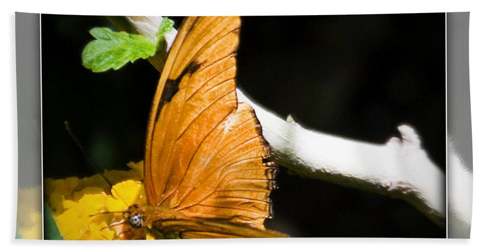 Julia Butterfly Beach Towel featuring the photograph Julia Butterfly by Walter Herrit