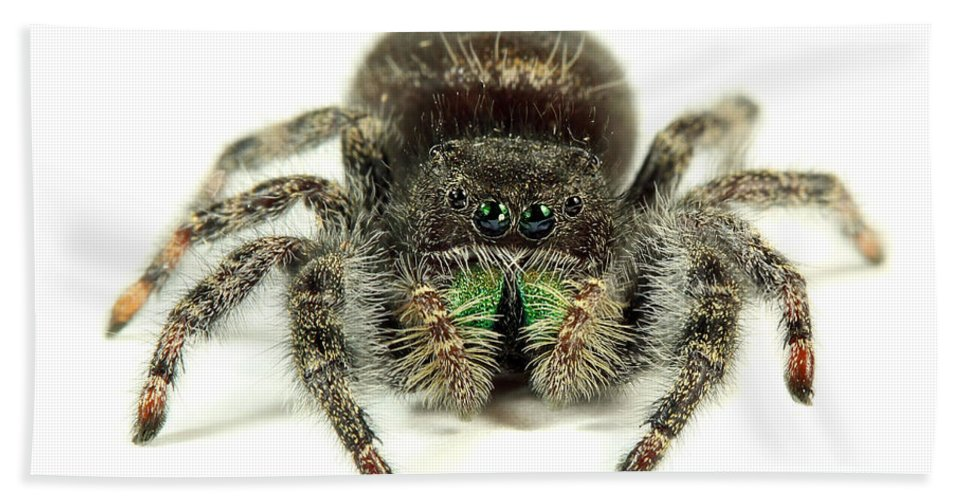 Spider Beach Towel featuring the photograph Jumping Spider by Paul Fell