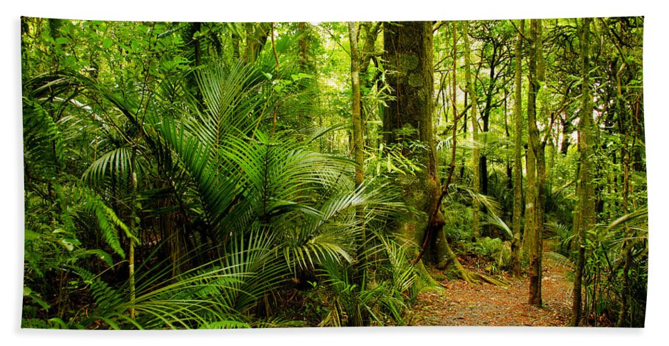 Forest Beach Towel featuring the photograph Jungle Scene by Les Cunliffe