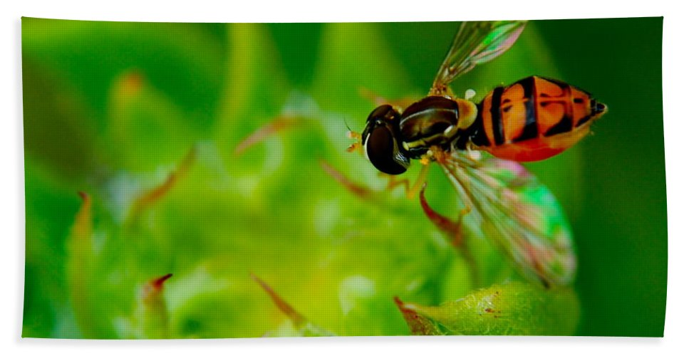 Bee Beach Towel featuring the photograph Just Beecause by Frozen in Time Fine Art Photography