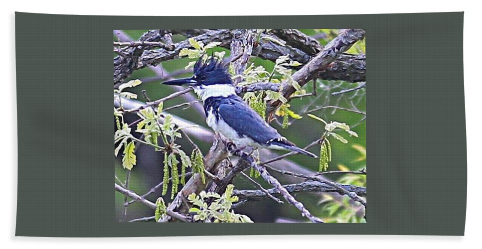 Belted Kingfisher Beach Towel featuring the photograph King Of The Tree by Elizabeth Winter