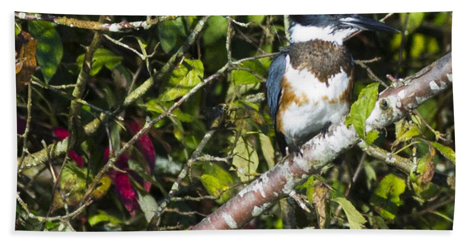 Kingfisher Beach Towel featuring the photograph Kingfisher by Rob Mclean