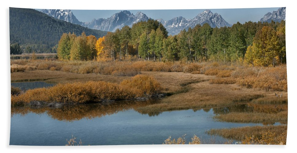 Grand Teton Beach Towel featuring the photograph Kiss Of Fall In The Grand Tetons by Sandra Bronstein