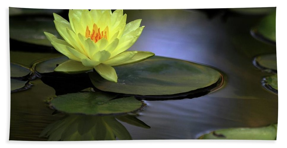 Water Lily Beach Towel featuring the photograph Kissed By The Sun by Sabrina L Ryan
